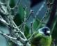 我的相册几支鸟