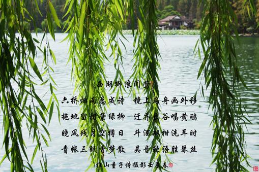 七绝西湖十景之三《柳浪闻莺》【原创】 - 清源 - 清源流韵的博客(2457065470)