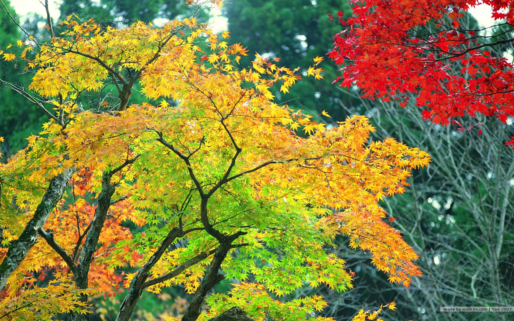 nature_autumn_red_leaves_24120_11.jpg