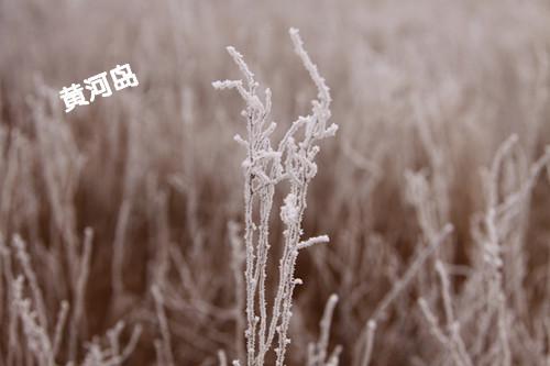 雾凇 3.JPG