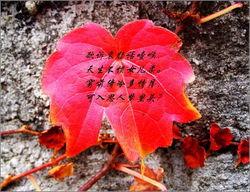 4732,红叶题诗多传奇(原创) - 春风化雨 - 春风化雨的博客