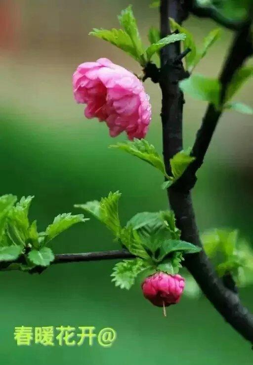 【七绝.盼春】
