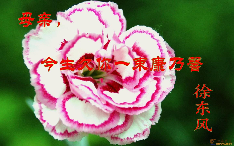 【徐东风散文】母亲,今生欠你一束康乃馨
