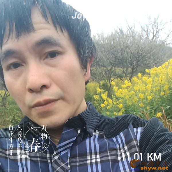 11公里处山地里一片盛开的油菜花