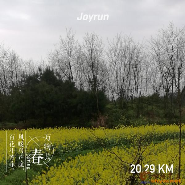 20.29公里处是黄黄的一遍,惹人观赏,那是农家的油菜花。