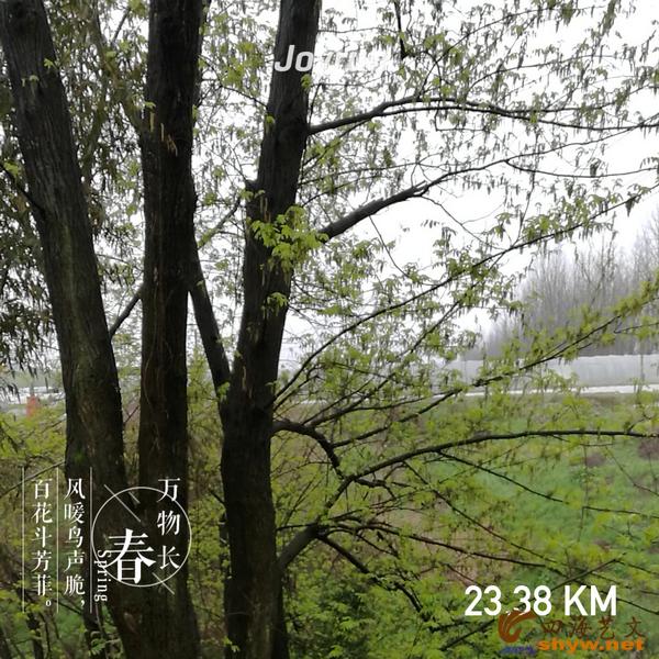 23.38公里处古树参天,鸟声不绝